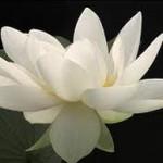 flowers123